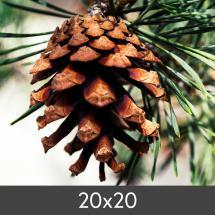Förstoring FineArt Bamboo 290 g