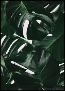 Monstera Plant I Poster