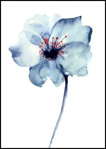 Aquarelle Flower - Blue Poster