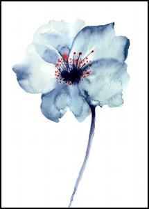 Aquarelle Flower - Blue Poster