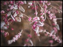 Blomma Närbild Poster