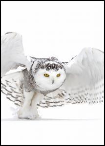 Snowy Owl Jazz Wings Poster