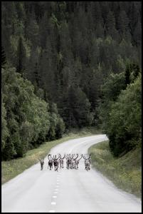 Reindeer road Poster