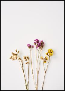 Dried flowers II Poster