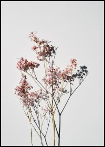 Dried flowers I Poster
