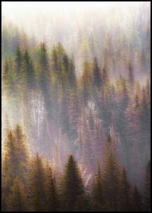 Misty Mood in the Forest Poster