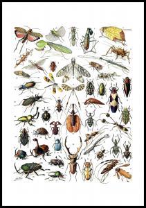 Skolinsekter II Poster