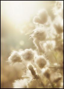 Fluffy flowers Poster
