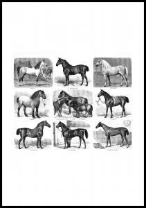 Hästraser Poster