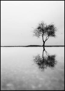 Lonely Tree Reflection Poster