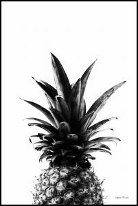 Pineapple B&W Poster