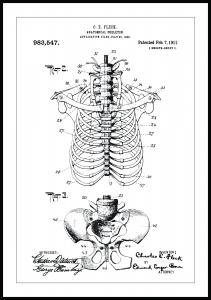 Patentritning - Anatomiskt Skelett II Poster