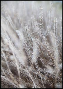 Frosty Grass Poster