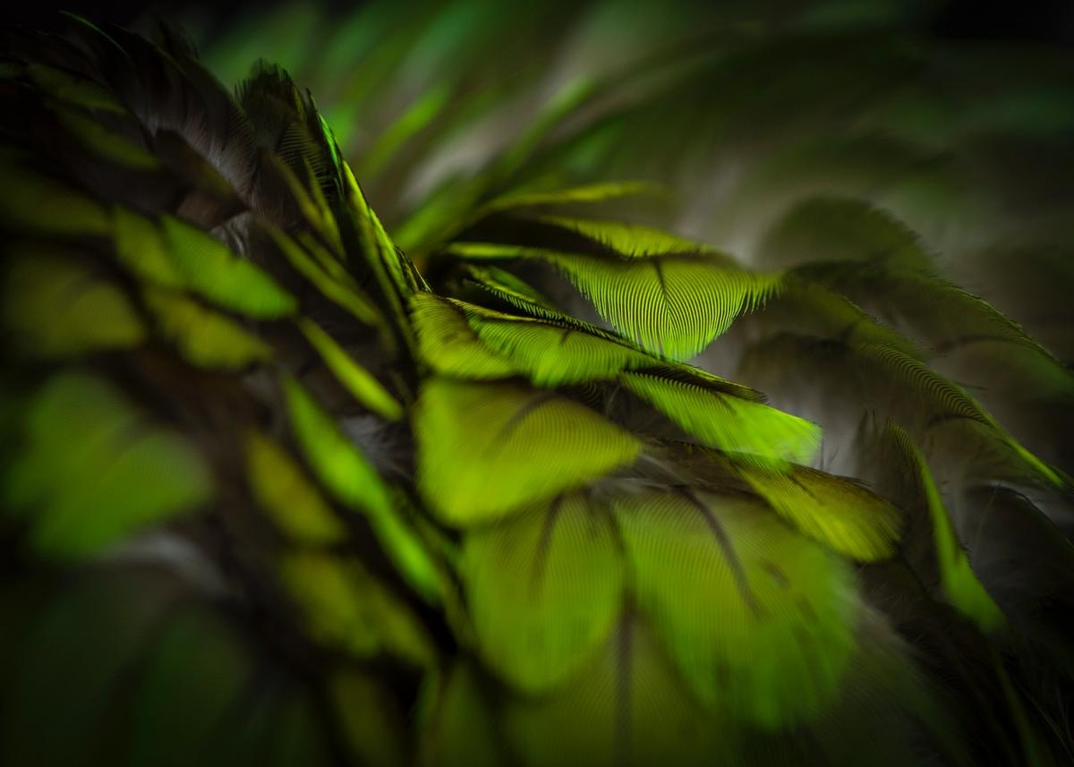 Bildverkstad Green feather