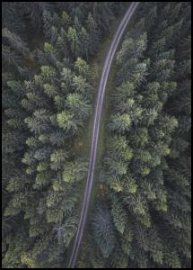 Small road through the forest Poster