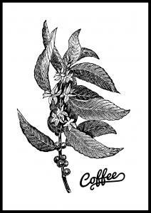 Coffee Botanical Poster