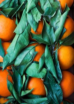 Bildverkstad Oranges II