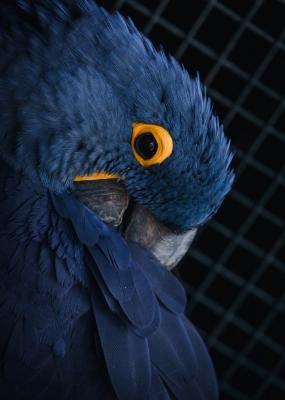 Bildverkstad The Parrot