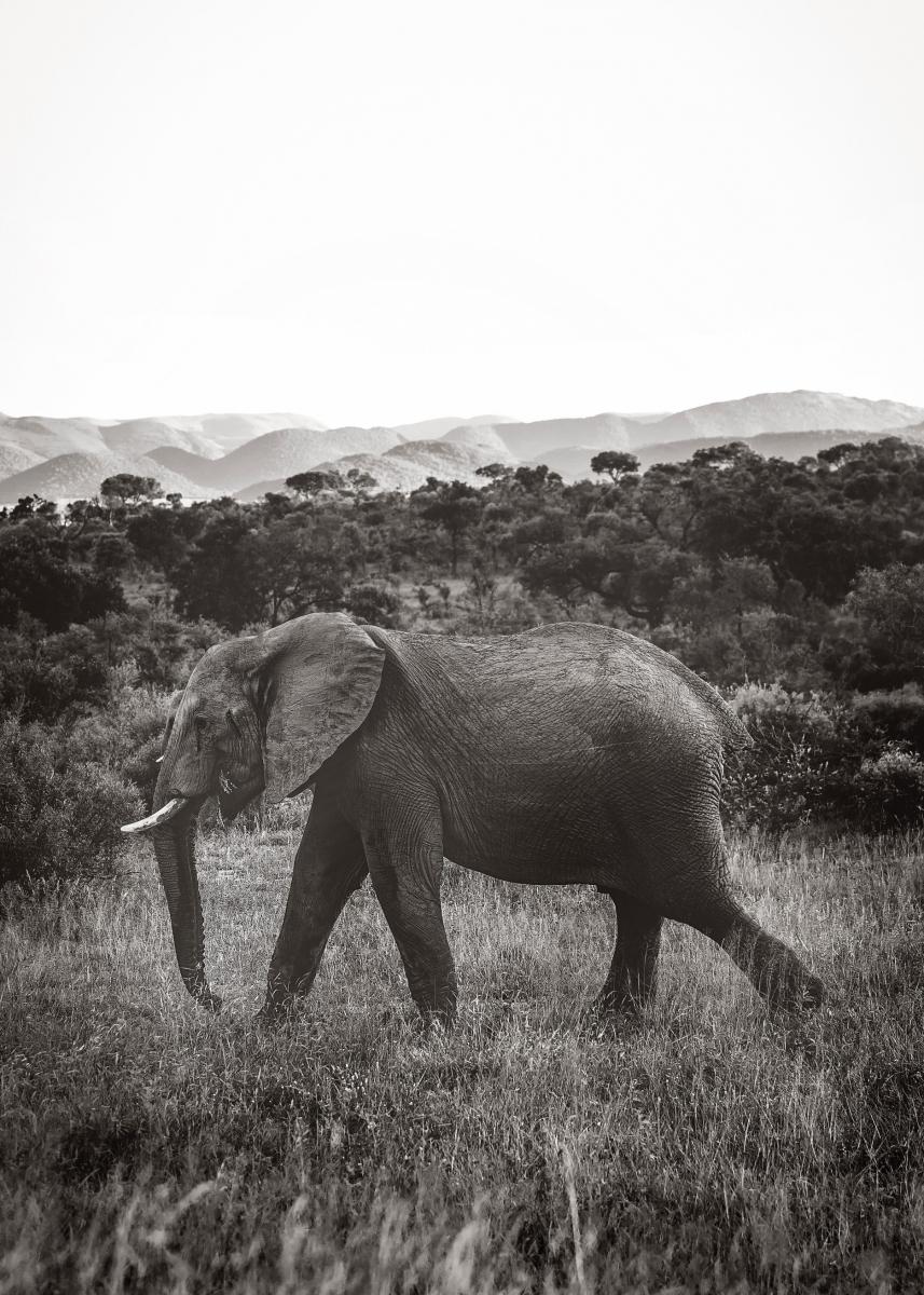 Bildverkstad Walking Elephant